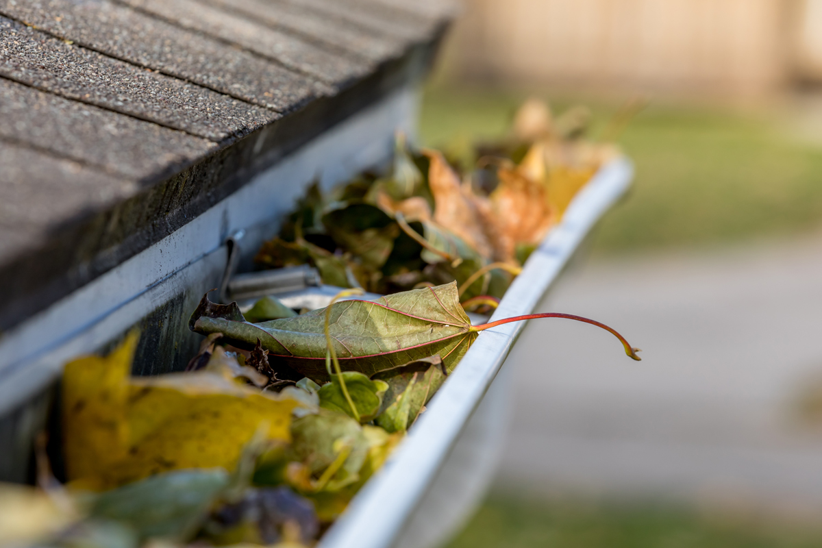 Don't Neglect Roof Cleaning And Maintenance This Spring